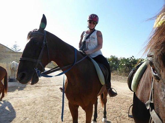 Golden Bay Horse Smiling!! - Photo de G...