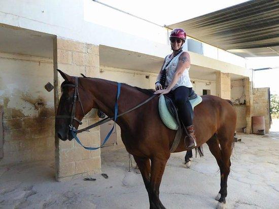 Golden Bay Horse Golden Bay Horse
