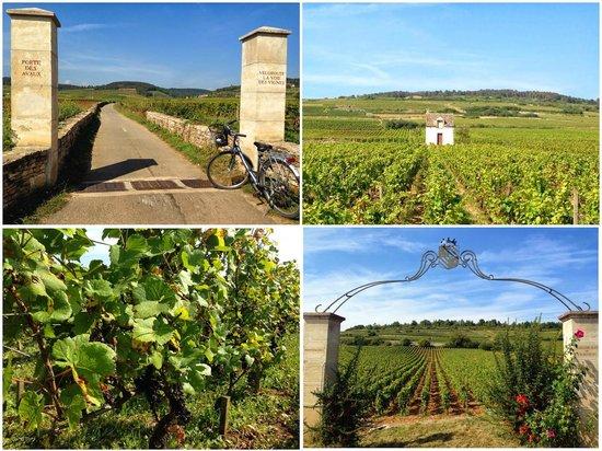 La Voie des Vignes : Pictures along the way