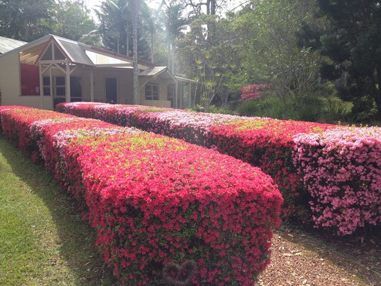 Kiwarrak Country Retreat: The beautiful hedges in September
