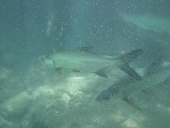 Circuito Ojo de Agua Baldiosera: foto sub - cenote