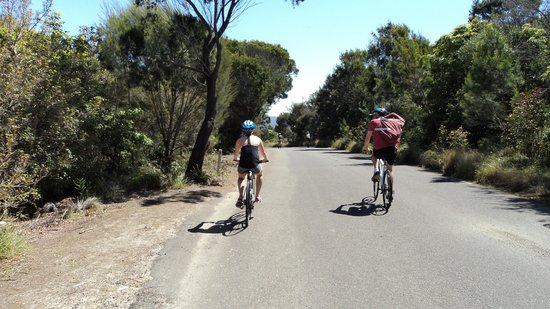Manly Bike Tours and Bike Hire : On the way to North Head