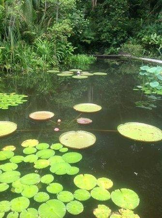 Tropical Spice Garden: The Water Garden