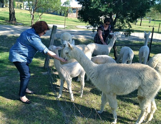 Starline Alpacas Farmstay Resort : Friendly locals