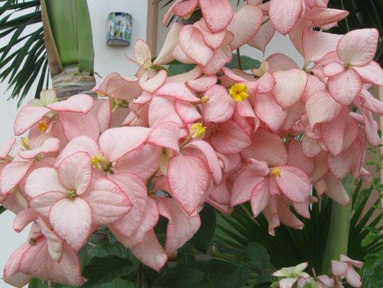 Casa Virgilios: Beautiful flowers everywhere!