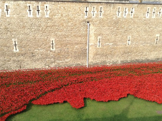 Poppies Like A River Of Blood Picture Of Tower Of London London - Tower of london river of poppies