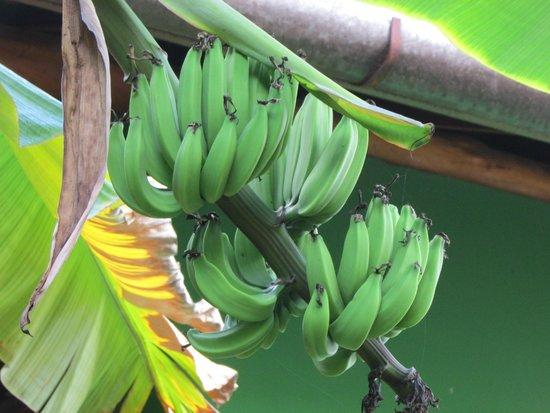 Pousada Casa De Praia: banane