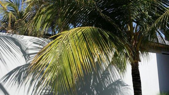 One Eleven: Palms