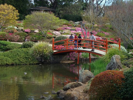 Japanese Garden One Of The Vermilion Bridges Cherry Blossom