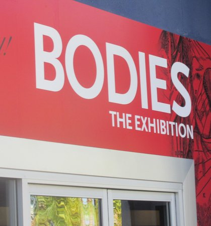 The Body Exhibit