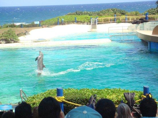 Sea Life Park Hawaii: イルカショーのお姉さんの説明は英語です。