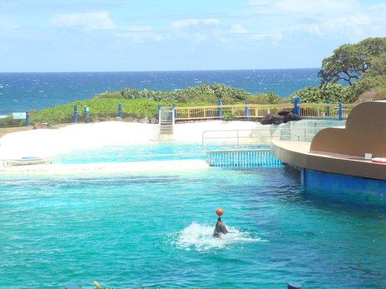 Sea Life Park Hawaii: イルカショー   ここの向こう岸でエンカウンターします。