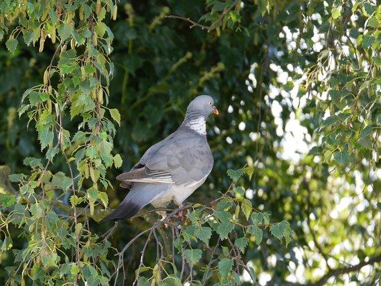 Holly House Bed & Breakfast: a bit of wildlife in her garden