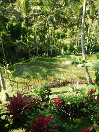 Boni Bali Restaurant: View from the Table