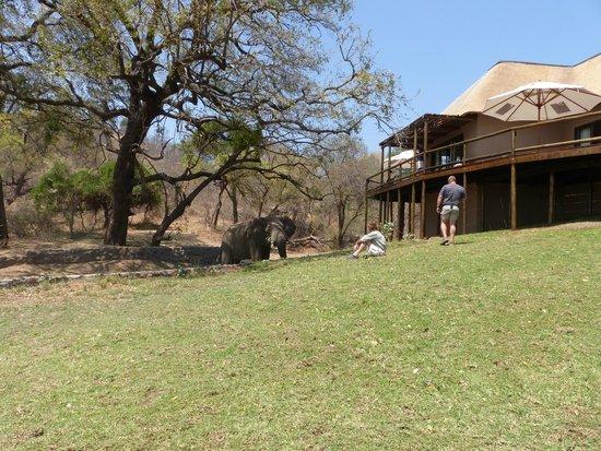 Wild Journeys: Elephant at the Naledi Lodge