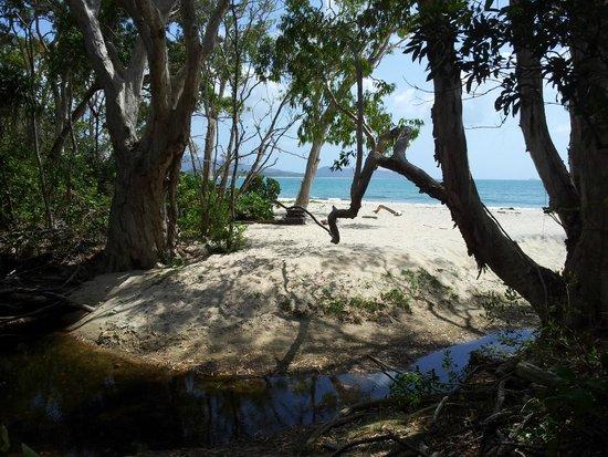 Hinchinbrook Island: Nina Bay