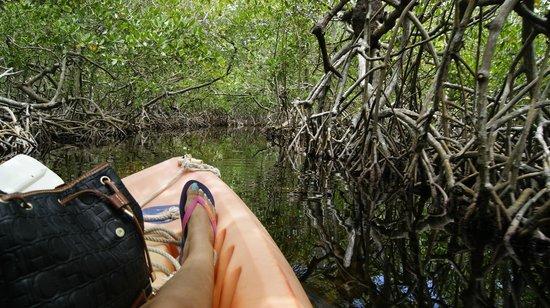 Kayak Utila: Canal entre Manglares - Utila/Honduras
