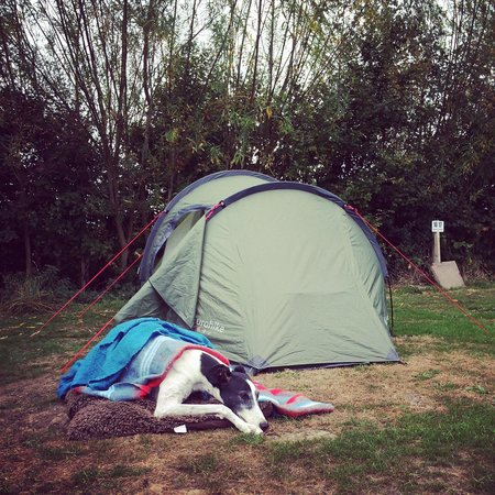 Common End Farm Campsite: Dogs allowed, but they don't have to enjoy it!