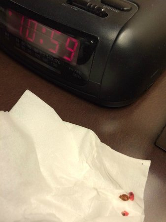 Quality Inn San Simeon: bedbug in quality inn
