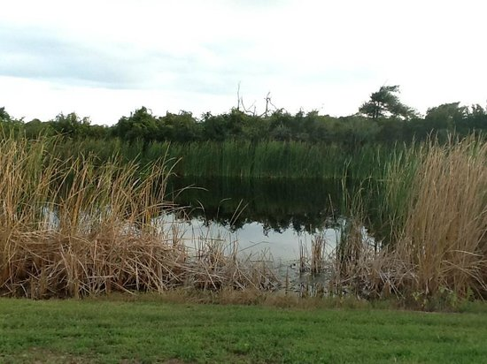 Gulf State Park Campground : Waterfront