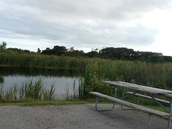 Gulf State Park Campground : Waterfront site