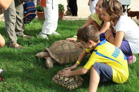 Andria, Italia: Tartarughe giganti