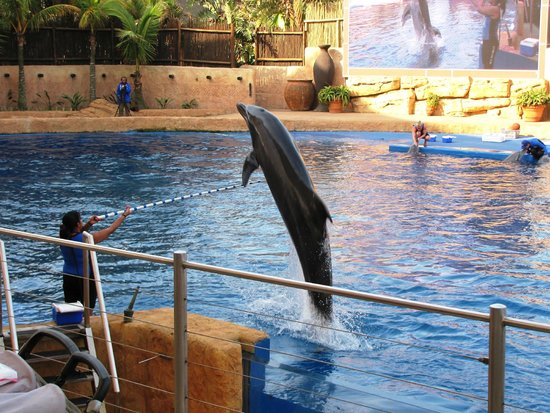 uShaka Sea World Aquarium: Dolphin Show