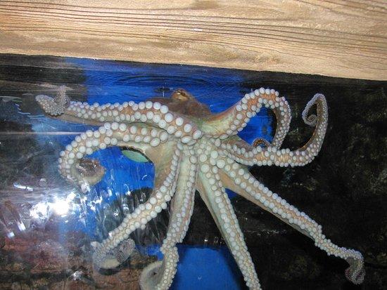 Octopus Picture Of Ushaka Sea World Aquarium Durban