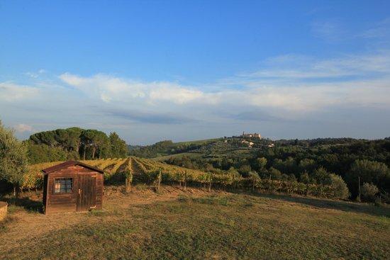Agriturismo Poggiacolle: view over vines