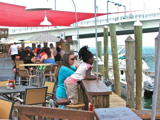 Gators Cafe & Saloon: Watching Dolphins