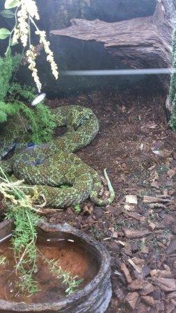 Terra Natura: snake