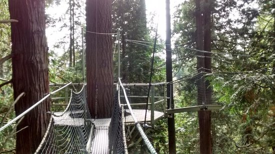 UBC Botanical Garden Canopy walk 1 & Canopy walk 1 - Picture of UBC Botanical Garden Vancouver ...