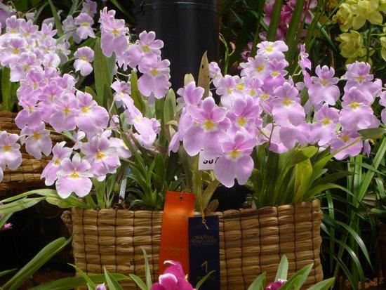orquideas picture of jardin botanico de medellin