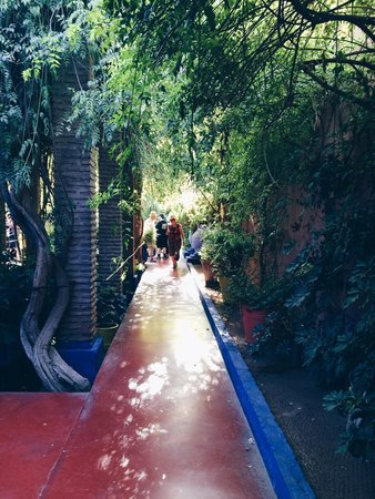 Majorelle garden picture of jardin majorelle marrakech for Jardin 00 garden