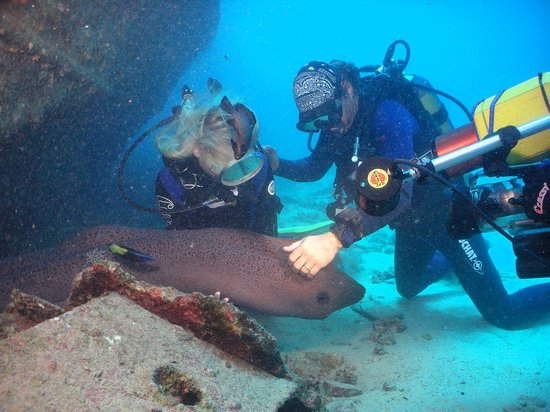 Easy Dive Mauritius: The giant moray eel