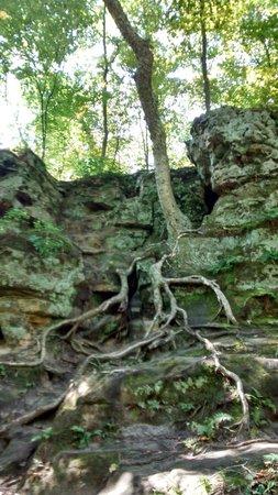 Parfrey's Glen : Love the tree roots
