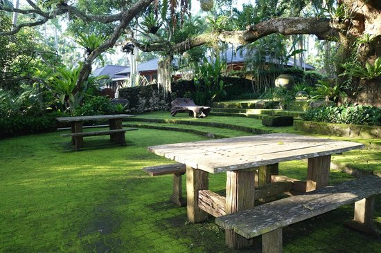 The Farm at San Benito : Under the Old Mango tree