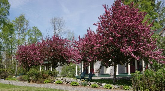 Greenville Inn at Moosehead Lake: Cherry Blossoms at the cottages