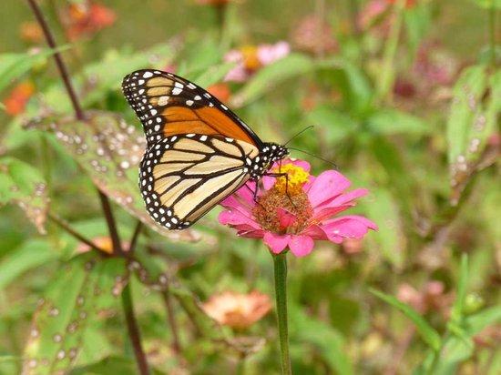 Butterfly Hollow - A Hidden Retreat : Butterfly Friend
