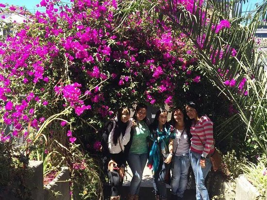 Travellers Inn: Lindas flores en la entrada