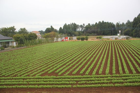 Narita Airport Hostel : Agricultural areas in Narita district are nice to see