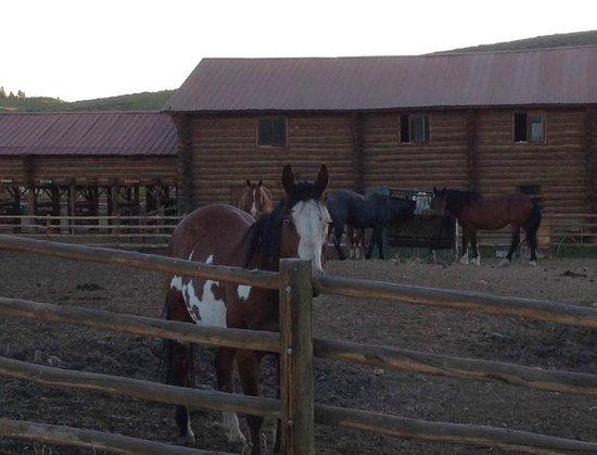 Waunita Hot Springs Ranch : paddock