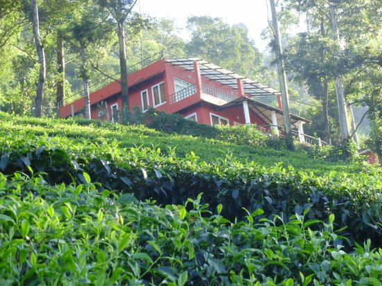 Carnival Tours & Travels: Tea valley resort munnar