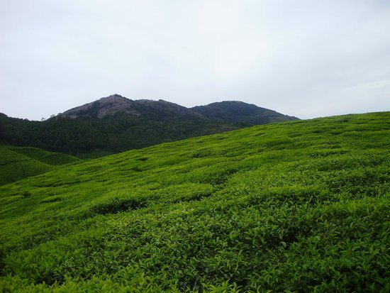 Carnival Tours & Travels: landscape at munnar