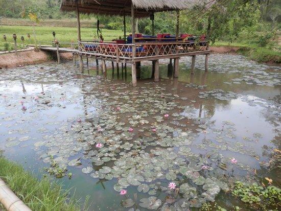 Kamu Lodge : Fishpond and relaxation area