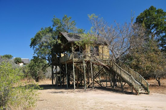Pezulu Tree House Game Lodge: tree house