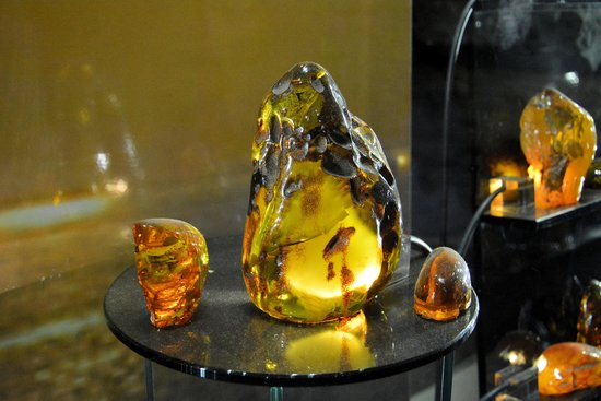 Amber Museum-Gallery (Gintaro Muziejus-Galerija): 琥珀の展示品