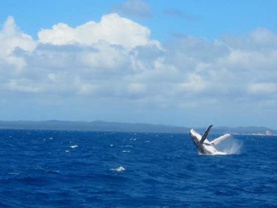 Tasman Venture - Day Tours: Humpback Calf Jumping