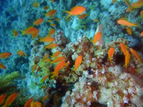 Sinai Dive Club: Typical views on the reefs