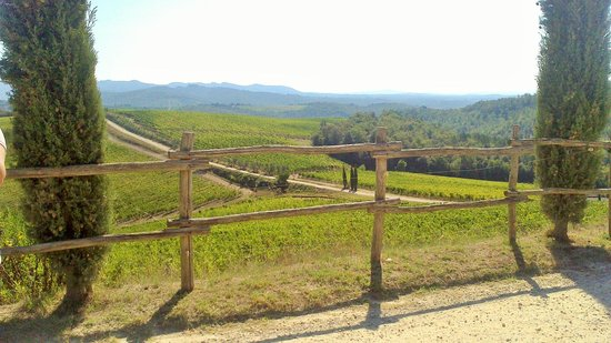 Borgo Carpineto: Nei dintorni